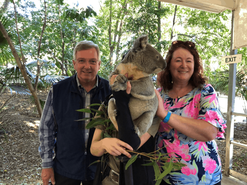 Koala in Brisbane Zoo - Clow Family Update
